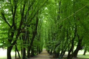 Park przy pałacu w Przeworsku fot. Emilia Szutenbach